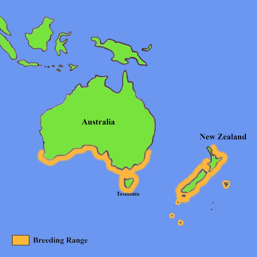 Penguin Map New Zealand and Australia