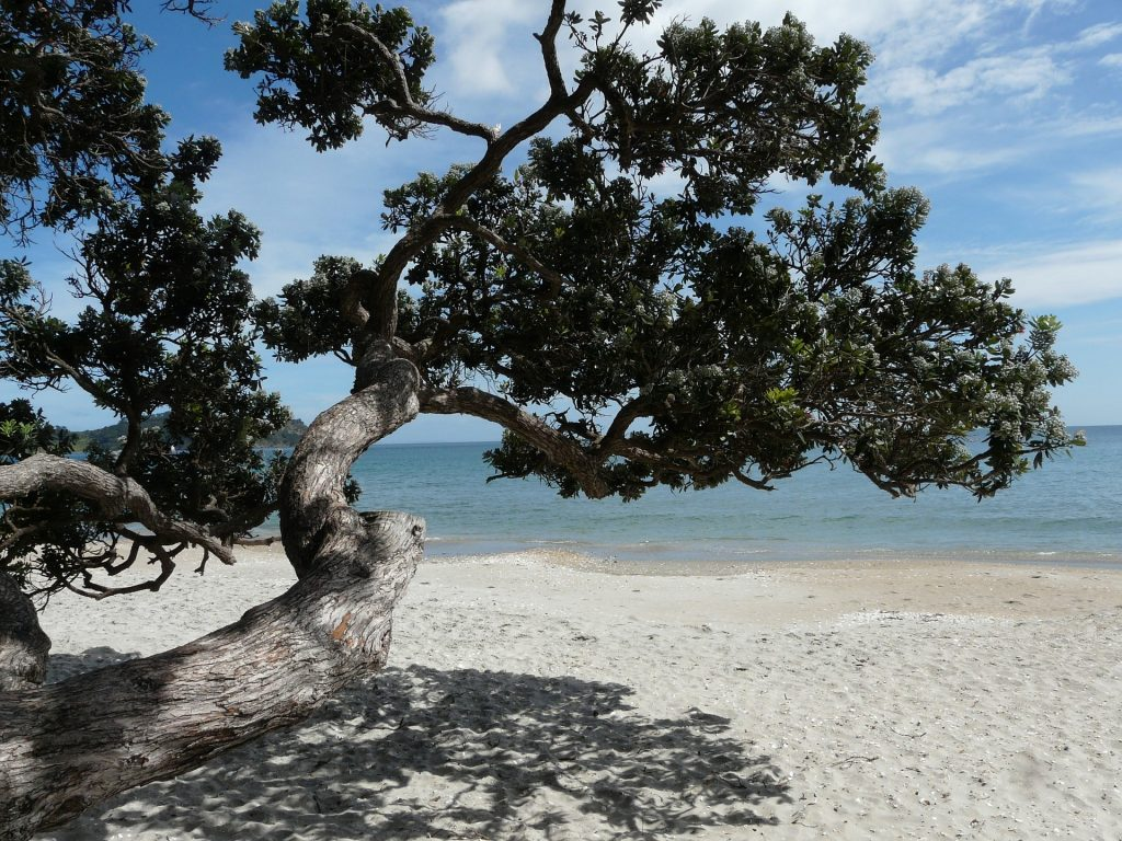 Waiheke Island beach with tree