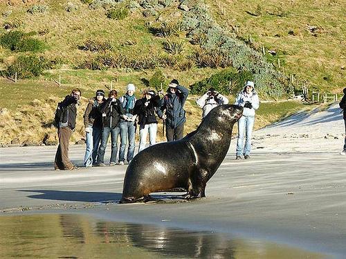 Elim Wildlife Tours Seal3