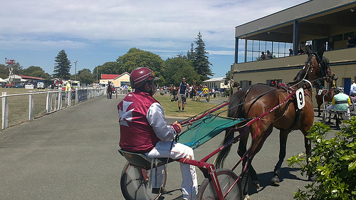 New Zealand Culture - a day at the Races