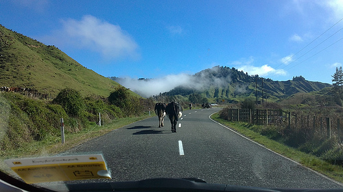 Forgotten World Highway New Zealand