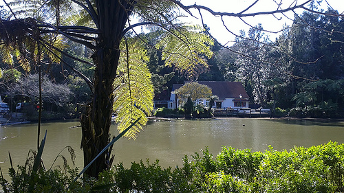 Pukekura Park tearoom views