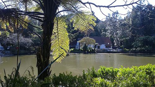 Pukekura Park tearoom views