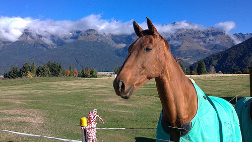 Farmstays amidst New Zealand scenery