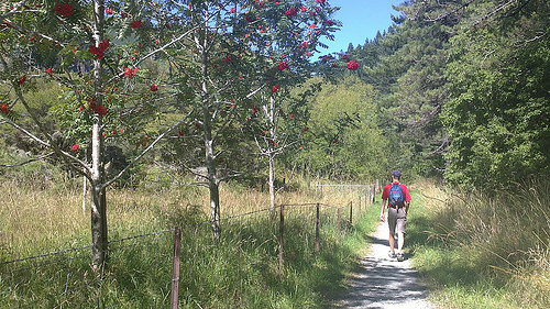 Mitai Valley walk small