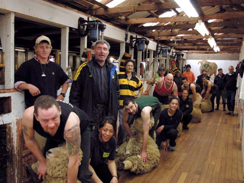 New Zealand shearing gang