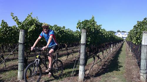 Biking Martinborough Vineyards2