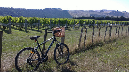 Martinborough vineyard biking3.jjpg