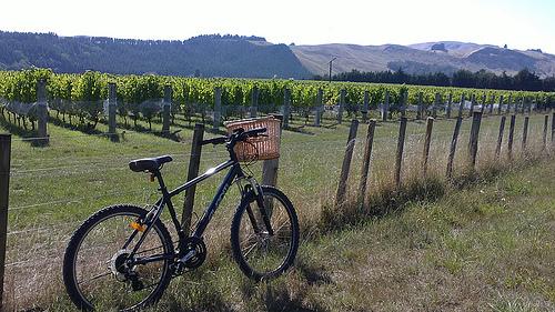 Martinborough vineyard biking3.jjpg