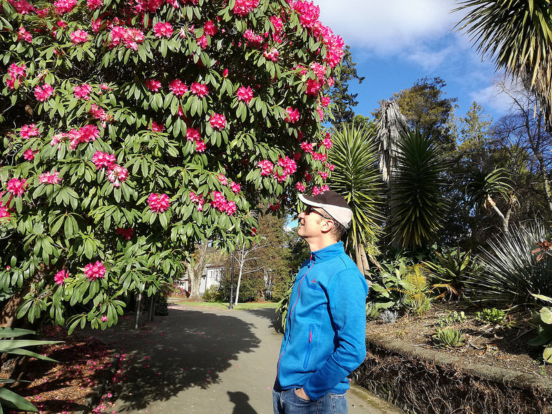 Michael with Rhododendron tree