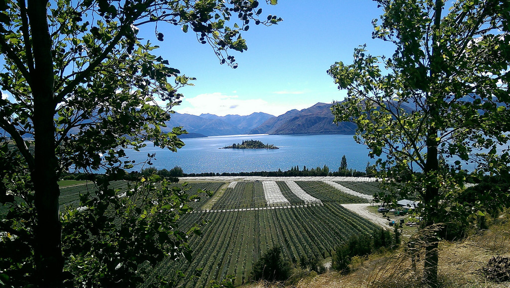 Rippon Vineyard on Lake Wanaka
