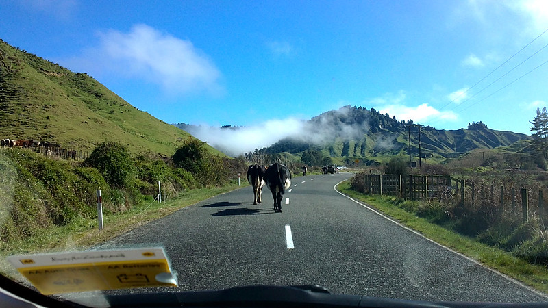 The Travelling New Zealand Specialist Travel Agent - off the beaten track