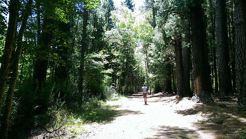 Hanmer Forest Walk