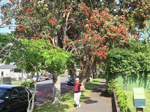 Mt Eden leafy suburb