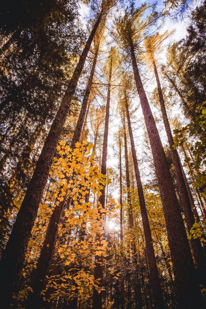 Hanmer Springs forest