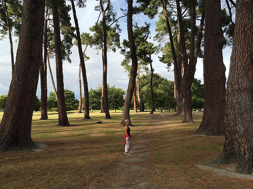 Christchurch Hagley Park trees