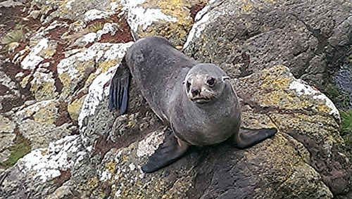 Elm Wildlife Tour seal 2