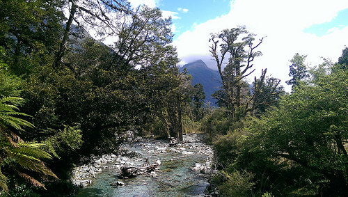 Hollyford Track nature hike