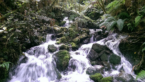 Hollyford Valley pure water