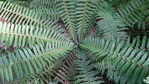 Rob Roy Guided Walk fern