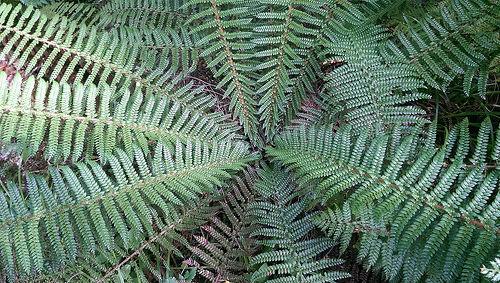 Rob Roy Guided Walk fern