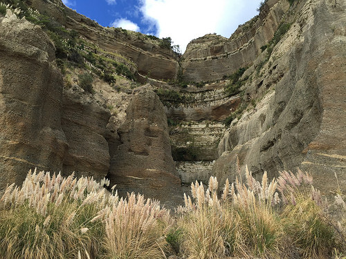 Cape Kidnappers Limestone closeup