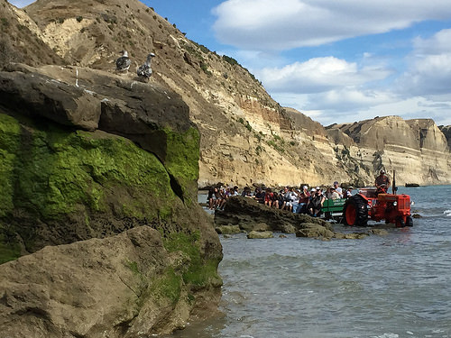 Cape Kidnappers Gannet colony tractor tour