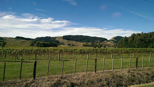 Gisborne scenery