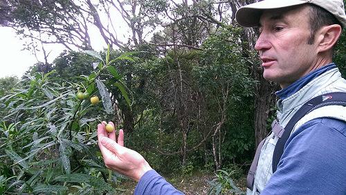 Kapiti Island fruit