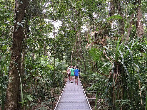 The Daintree Rainforest Tours from Port Douglas - Daintree Forest Walk