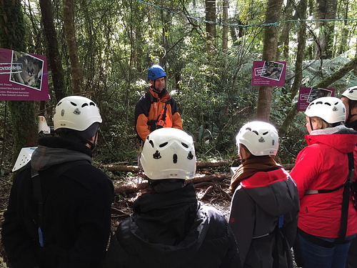 Canopy Tours conservation