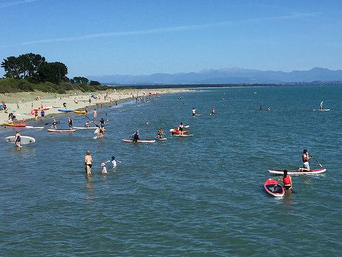 Waitangi Day Paddleboard