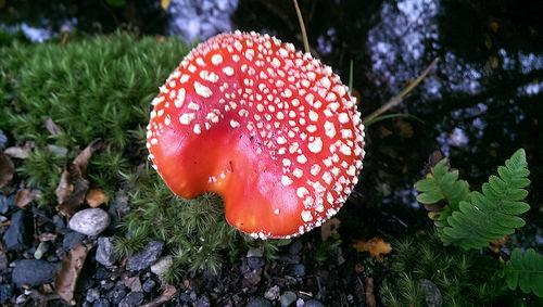 Kepler Track mushroom small