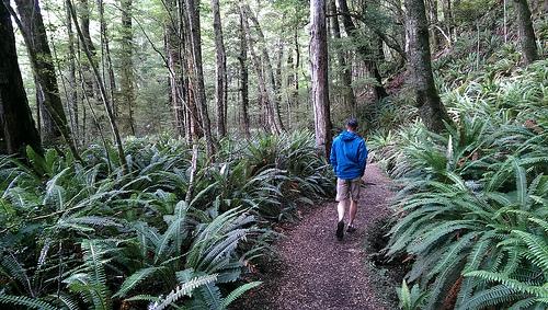 Kepler track ferns