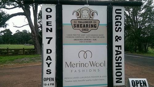 Yallingup Merino wool