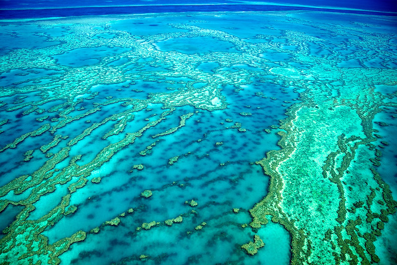 Snorkelling and Diving Great Barrier Reef for Honeymooners.