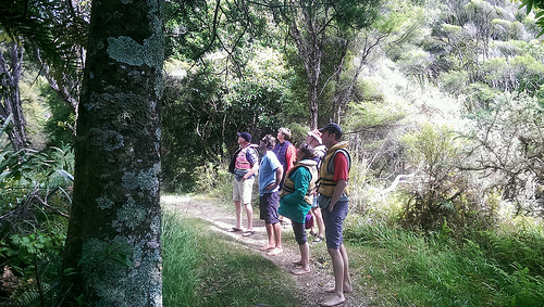 abel-tasman-eco-tours-forest-walk