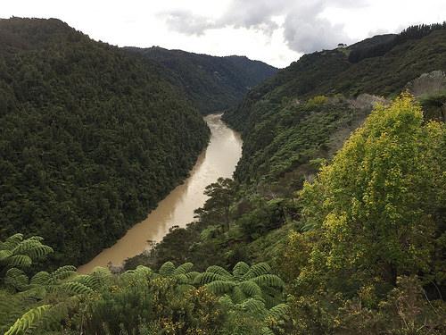 Drive along Whanganui River to Pipiriki