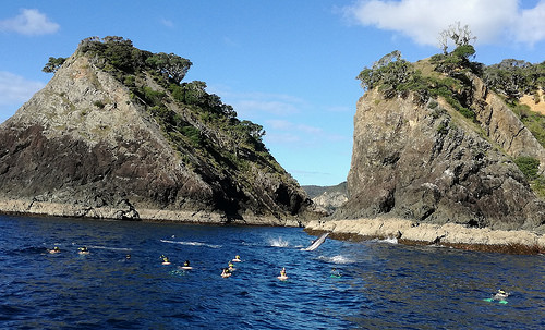 Kerikeri accommodation options - Paihia Dolphin Encounter