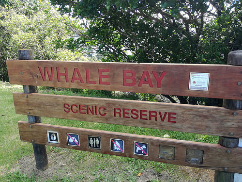 Whale Bay Scenic Reserve