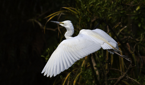 White Heron eco tours
