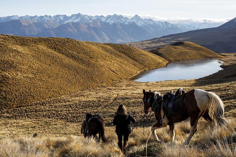 horse trekking peel forest geraldine