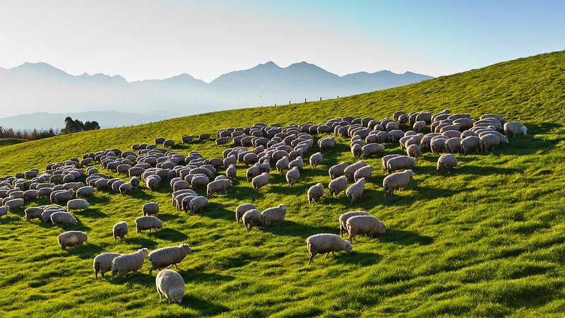 farm tours new zealand